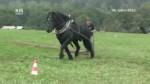 Hamry – Setkání chovatelů a přátel koní