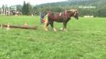 40/2012_Kaleidoskop 2: Setkání chovatelů a přátel koní Hamry