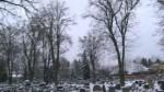 Veřejná zakázka na kácení a údržbu stromů