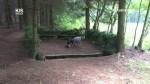 Lesní zkoušky ohařů