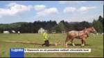 V Hamrech se už posedmé setkali chovatelé koní