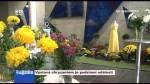 Výstava chryzantém je podzimní událostí