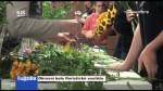 Okresní kolo floristické soutěže