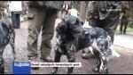 Svod mladých loveckých psů
