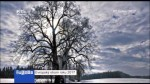 Evropský strom roku 2017