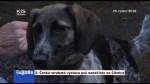 2.  Česká strakatá výstava psů nanečisto na Cihelce