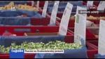 39/2020 Pozvání na Svatováclavský jarmark